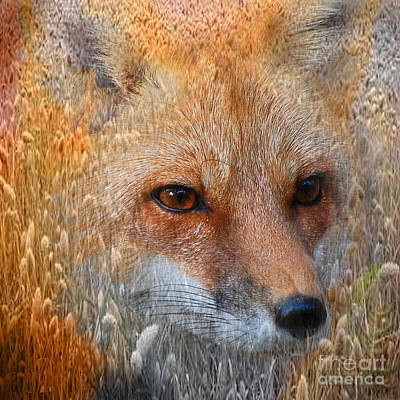 Photograph - Field Of Dreams Fox Pillow by Kathy Baccari