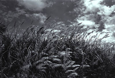 Photograph - Field Of Dreams by Guillermo Rodriguez