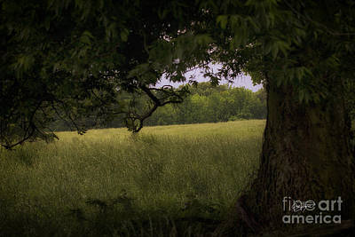 Photograph - Field Of Dreams II by Cris Hayes