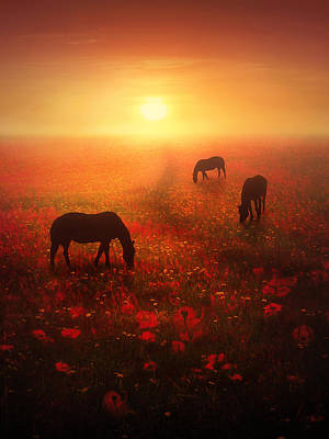 Poppies Field Digital Art - Field Of Dreams by Jennifer Woodward