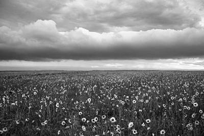 Photograph - Field Of Flowers by Angelique Rea