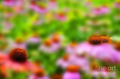 Photograph - Field Of Flowers by Dan Friend