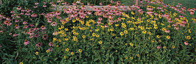 In Bloom Photograph - Field Of Flowers In Bloom, Marion by Panoramic Images