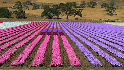 Photograph - Field Of Flowers by Jeff Lowe
