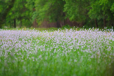 Photograph - Field Of Flowers by Jessica Brown