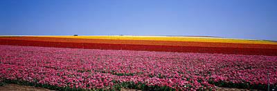 Field Of Flowers, Near Encinitas Art Print by Panoramic Images