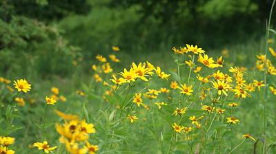 Field Of Yellow Wild Flowers   # Art Print