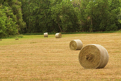 Boardroom Photograph - Field Of Freshly Baled Round Hay Bales by James BO  Insogna