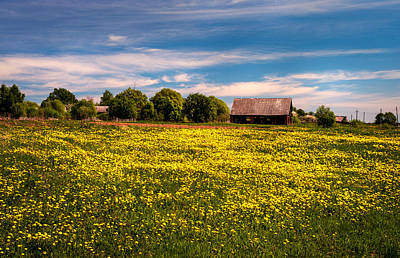 Photograph - Field Of Gold. Dandelions At Village by Jenny Rainbow