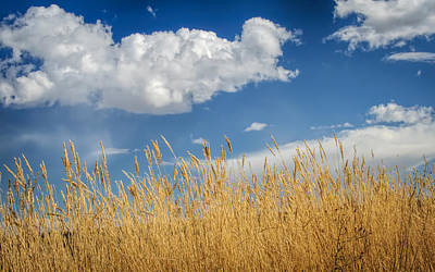 Photograph - Field Of Gold Under Montana Sky by Victoria Porter