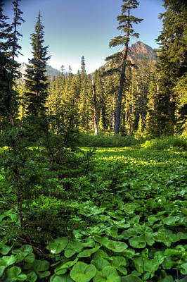 Photograph - Field Of Green And Gold by Joshua Cramer