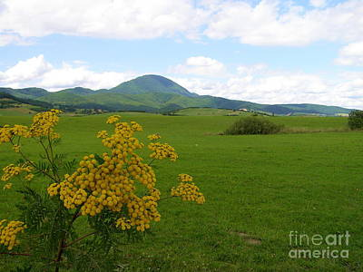 Photograph - Field Of Green by Tamyra Crossley