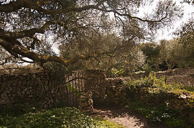 Traditional Minorcan Gate - Field Of Greens Art Print