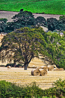Fife Photograph - Field Of Hay by Marcia Colelli