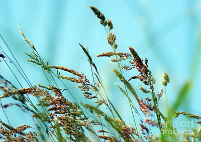 Photograph - Grass by Nina Ficur Feenan