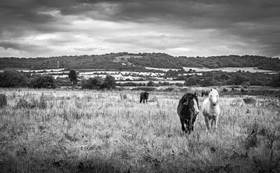 Photograph - Field Of Horses by Gary Gillette