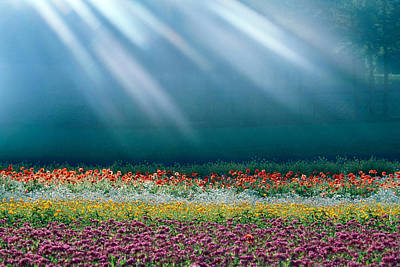 Fields Of Flowers Photograph - Field Of Multicolored Flowers by Panoramic Images