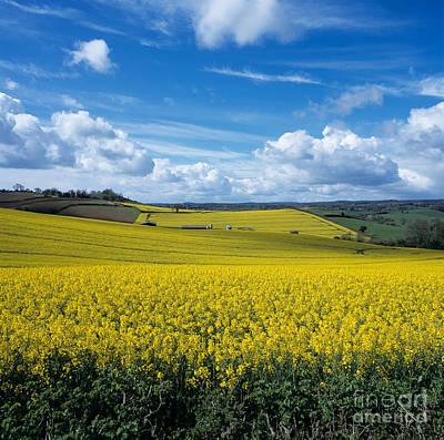 Photograph - Field Of Oilseed Rape by Nigel Cattlin