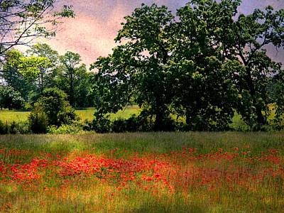 Field Of Poppies Art Print by Anne McDonald