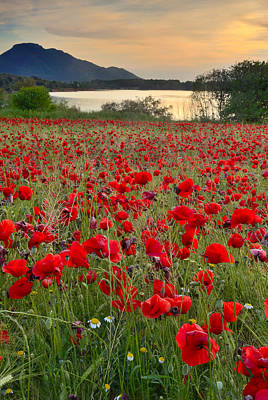 Field Of Poppies At The Lake Art Print by Guido Montanes Castillo