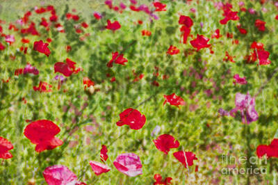 Photograph - Field Of Poppies Digital Art Prints by Valerie Garner