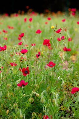 Photograph - Field Of Poppies by Edgar Laureano