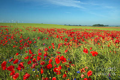 Photograph - Field Of Poppies Germany by Helmut Pieper