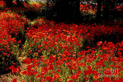 Photograph - Field Of Poppies by Paul W Faust -  Impressions of Light