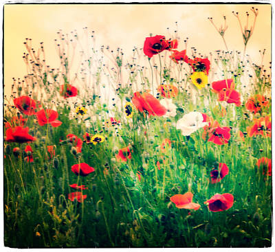 Photograph - Field Of Poppy's by Spikey Mouse Photography