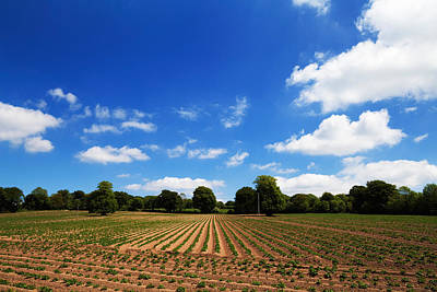 Field Of Potatoes, Near Inistioge Art Print by Panoramic Images