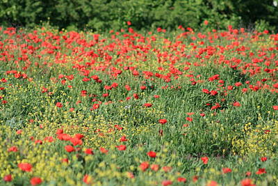 Photograph - Field Of  Red Poppies by Phoenix De Vries