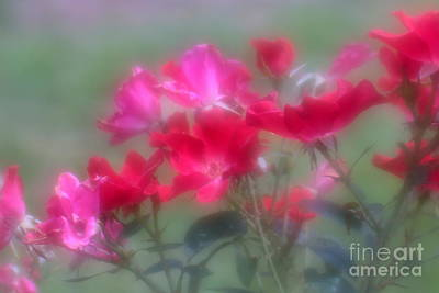 Photograph - Field Of Roses by Mary Lou Chmura