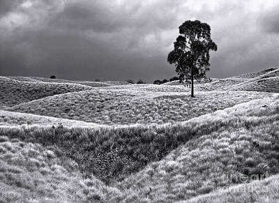 Photograph - Field Of Saddle Road Dreams by Ellen Cotton