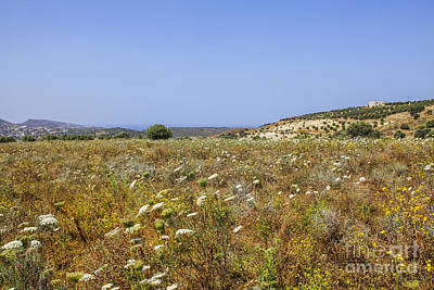 Photograph - Field Of Spring Flowers In Crete by Patricia Hofmeester