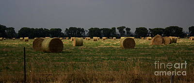 Photograph - Field Of Summer Hay by Amanda Holmes Tzafrir