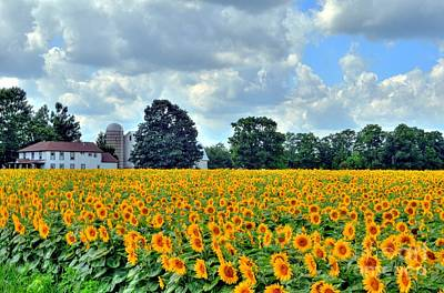 Kathleen Photograph - Field Of Sunflowers by Kathleen Struckle