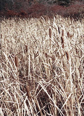 Digital Art - Field Of The Cattails by Tim Richards