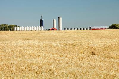 Field Of Wheat In Alberta Art Print by Ashley Cooper