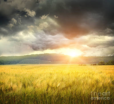 Field Of Wheat With Ominous Clouds  Art Print by Sandra Cunningham