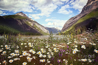 Photograph - Field Of Wild Flowers With Rocky Mountains In Background by Sandra Cunningham