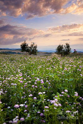 Photograph - Field Of Wildflowers by Brian Jannsen