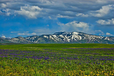 Photograph - Field Of Wildflowers by Don Schwartz