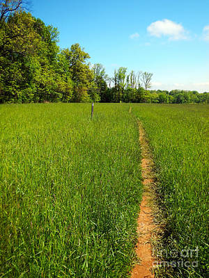 Photograph - Field Path by Glenn Gordon