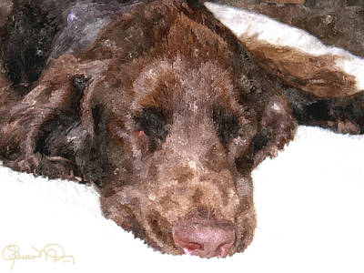 Photograph - Field Spaniel Dreams by Susan Molnar