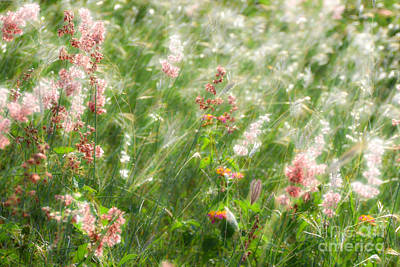 Photograph - Field Weeds-no2 by Darla Wood