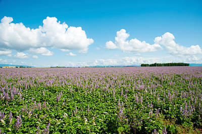 Provence Photograph - Field With Flowers Near D8, Brunet by Panoramic Images