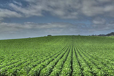 Photograph - Fields 4 by SC Heffner