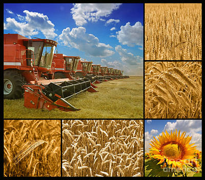 Fields And Grain Collage Art Print by Boon Mee
