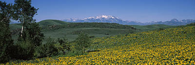 Fields Humboldt National Forest Nv Usa Art Print by Panoramic Images