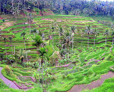 Photograph - Fields Of Bali by Ramona Johnston
